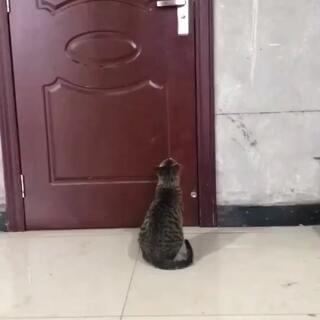 我家的猫成精了😂😂#U乐国际娱乐##猫星人#