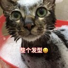 😱怎么办 急急急 在线等😶我家的猫成精了?😂说…说…说话了啊 说了啥?大家快给我翻译翻译😱#宠物##精选##萌宠洗澡记#