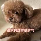 @美拍小助手 这给你狂的,这小爆脾气,你们谁家狗这样??#我要上热门##宠物##搞笑视频#