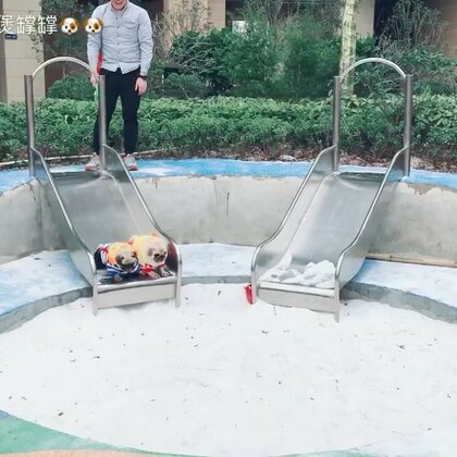 原来煲煲喜欢玩滑梯🐶🐶