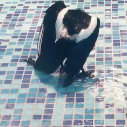 帅鸟爱洗澡