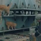 7旬奶奶靠倒马桶赚钱, 每天捡破菜煮来喂流浪猫, 15年风雨无阻#二更视频##正能量##我要上热门#