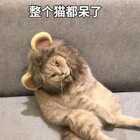 整个猫都呆了#宠物##喵星人#