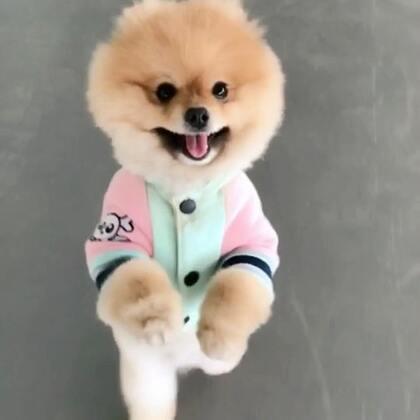 奔跑的小狗#宠物##博美##萌宠#