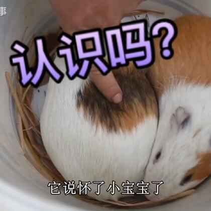 这是我见过最可爱的老鼠,都舍不得吃