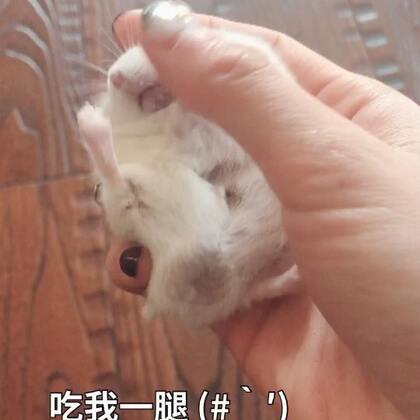 泡芙式拒绝-你谁啊 没有瓜子别碰我 🙂#寵物##仓鼠##我要上热门#