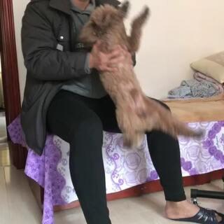 #宠物狗狗##狗年旺旺旺旺#