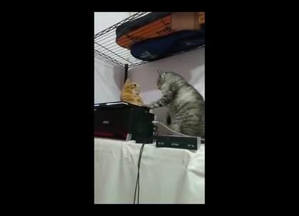 你啊!不要欺负小橘,它都紧张得吞了两次口水啦!😳😳😳#宠物#