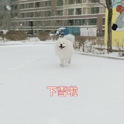 哈尔滨又下雪啦#宠物#