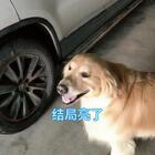 知道我要出去,在车旁边等了半个小时,虽然空小,但是它很开心#宠物##搞笑#
