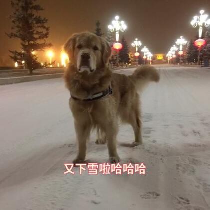 #宠物#我们又下大雪啦😎