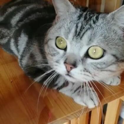 仿佛这时间已停止...你问我 你瞅啥...我tm也想问你瞅啥...!我找了半天也不知道他们仇杀...😂😂😂#宠物#