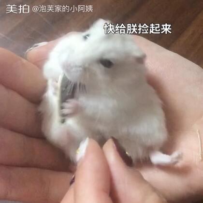 今天吃瓜子(•ૢ⚈͒⌄⚈͒•ૢ)#寵物##全民嗑瓜子##仓鼠的日常#