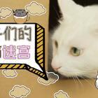 mimo: 我们喵星人,只要有纸箱子,自己的窝都不想再回去!✨关注并转发点赞3月12号抽两位送出猫咪公仔✨#宠物##mimo#