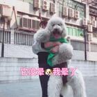 转完好晕,手也酸😅#抱宠物旋转大赛##宠物##精选#@美拍小助手 @宠物频道官方账号