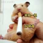 #仓鼠##宠物##独特萌宠#求赞求粉求转发求评论