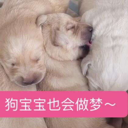 这位小可爱,你在吃什么?😹#宠物##狗宝宝##我要上热门@美拍小助手#