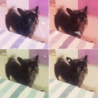 #宠物##狗年旺旺旺旺#大早上跑床边对我一阵吼😳😂