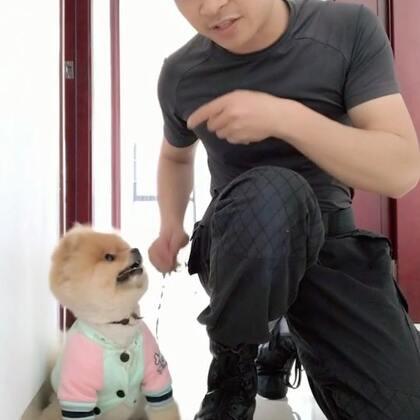 今天训练狗狗原地靠#宠物##狗狗训练##萌宠#