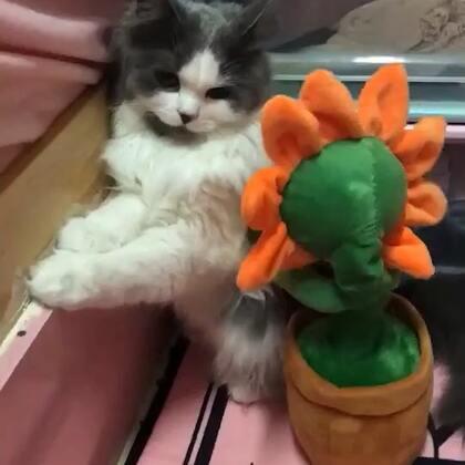 哈哈 绝望猫……