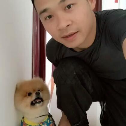 今天训练狗狗随行科目#宠物##狗狗训练##萌宠#