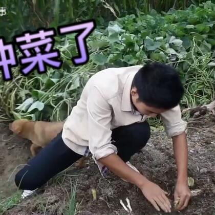 农村小哥带着小狗进菜园,临走前无意发现靓货,开心坏了#美食##乡村生活#