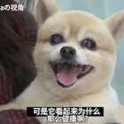 狗狗长寿的故事,1994年出生的狗狗Soondol相当于人类的134岁高龄!!