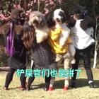 各种混乱😂别人的捣蒜舞,萌物们的捣乱舞😄#宠物##精选##跟拍上热门##@美拍小助手 @宠物频道官方账号