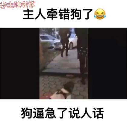 主人牵错狗,狗狗被逼急了说人话!!!#宠物#