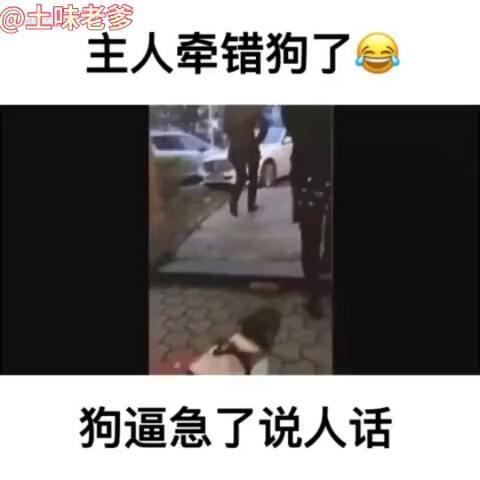 【土味老爹爹美拍】主人牵错狗,狗狗被逼急了说人话...
