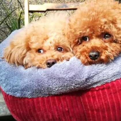 娘俩晒晒太阳🌞好舒服哦😘😘😘#宠物##宠物晒太阳##小魔豆一家#