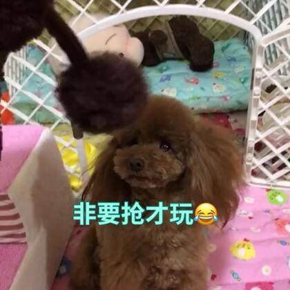 #汪星人##宠物#莎拉:麻麻,我就是要你陪我玩😘😘😘http://item.taobao.com/item.htm?id=557588985039 莎拉麻麻手工宠物零食,纯天然更健康!