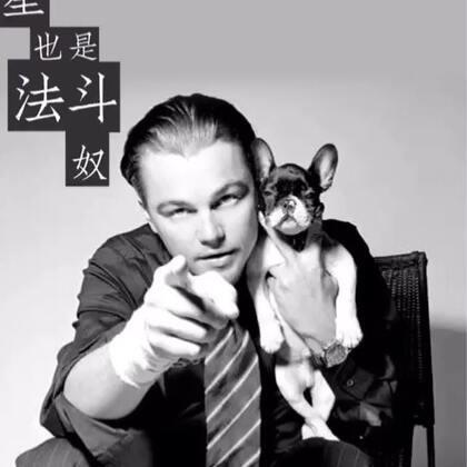 #我要上热门##我的小奶狗男友##萌宠#明星的盟猪宝宝🤩🤩🤩
