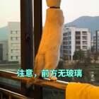 #喵星人#吓我一跳,猫差点掉下去!@美拍小助手 @宠物频道官方账号