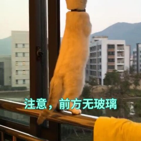 【主持人王威子美拍】#喵星人#吓我一跳,猫差点掉下去...