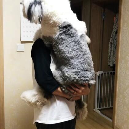 #宠物#抱着朵朵 他就一直往上爬🤣🤣
