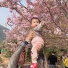 妈妈总算看到樱花了#宝宝##葫芦狗的日常#
