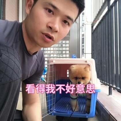 训练狗狗进出笼子训练#博美##狗狗训练#