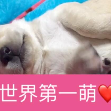 每日睡前一撸。😬#狗狗#