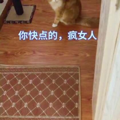 #宠物##家有萌宠#陪吃陪玩陪洗漱……