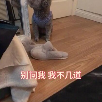 狗子闯祸后的反应 不看我就行了吗你!哈哈哈哈哈笑死 不要逃避!乖乖!#宠物#