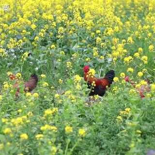 春暖花开,炒一盘菜心吧#美食#