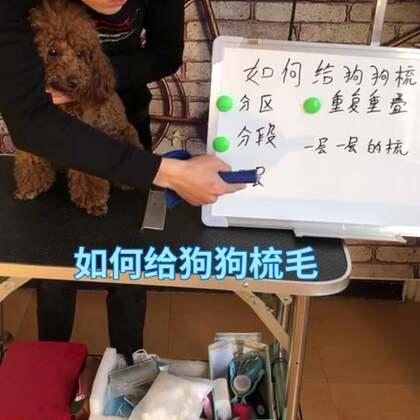 如何给狗狗梳毛【1】#宠物美容#