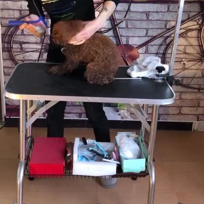 如何给狗狗梳毛【3】#宠物#