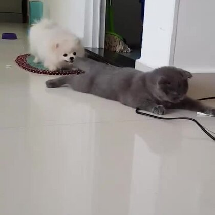 喵:你玩会儿别的成吗?😂😂😂#宠物#
