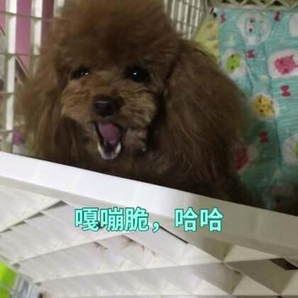 #宠物#鸡肉紫薯饼,嘎嘣脆,哈哈http://item.taobao.com/item.htm?id=527311814670莎拉麻麻手工宠物零食