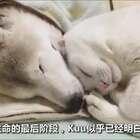 还记得它们吗?上周三,这只被喵星人深深爱着的17岁老柴犬走完了自己的一生。在它生命的最后阶段,主人和小猫Kuu一直陪在身边,很平静很幸福……💔💔💔#一千次暖心实验#
