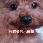 #宠物##精选##我要上热门#每次去洗完澡后,见到我都要开心的飞起来😁
