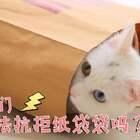 mimo:三只喵仔只给两个纸袋?朕觉得你就是在搞事!#宠物##mimo##timo#✨关注加评论点赞,下周抽两位送出猫咪双肩包哦✨