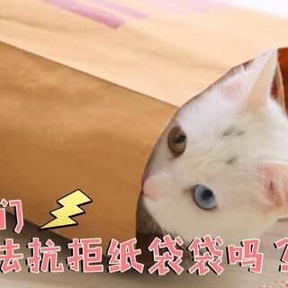 mimo:三只喵仔只给两个纸袋?朕觉得你就是在搞事!#宠物##mimo##timo#?关注加评论点赞,下周抽两位送出猫咪双肩包哦?